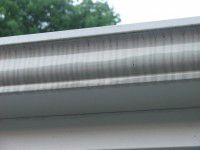 tigerstripes-black-lines-gutters
