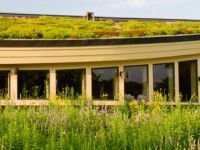 House-green-roof