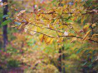 arbre-terrain-automne