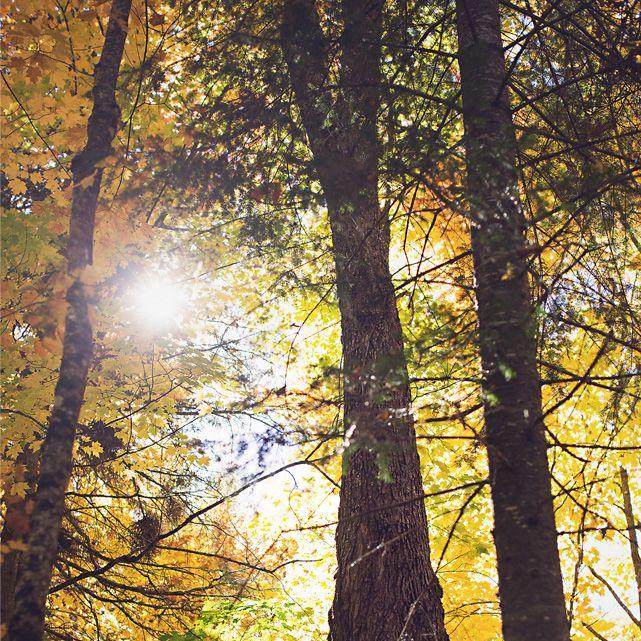 Arbres-automnes_couleurs