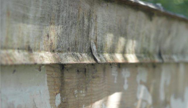 rotted-fascia